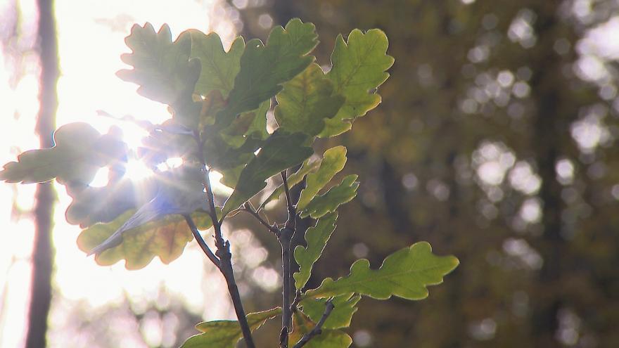 Video Hlavním opatřením proti suchu je co nejpestřejší les