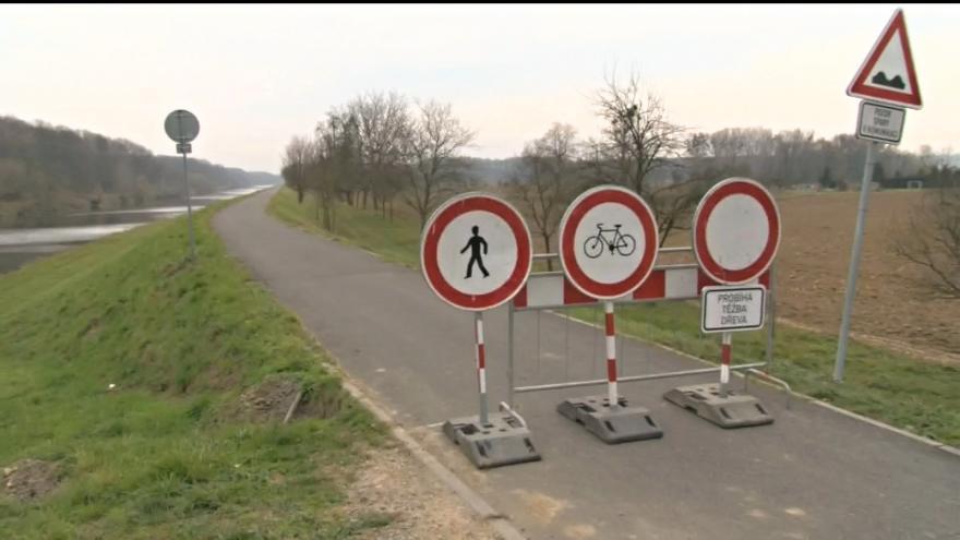 Video Cyklostezka je uzavřená kvůli kácení stromů