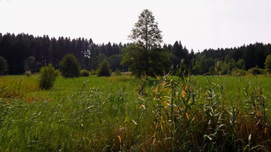 Video 90' ČT24 - Zemědělství šetrné k přírodě