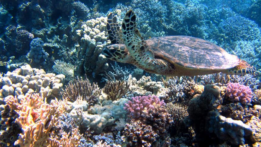 Video Korálový útes v Rudém moři