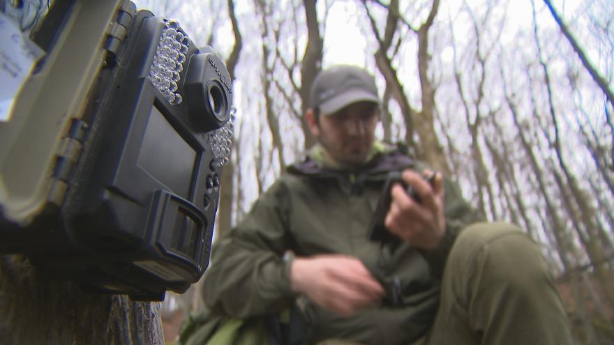 Video Zábery rysa Kraštofa z fotopasti