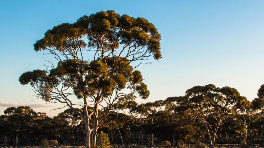 Video Záchrana rostlin v Austrálii