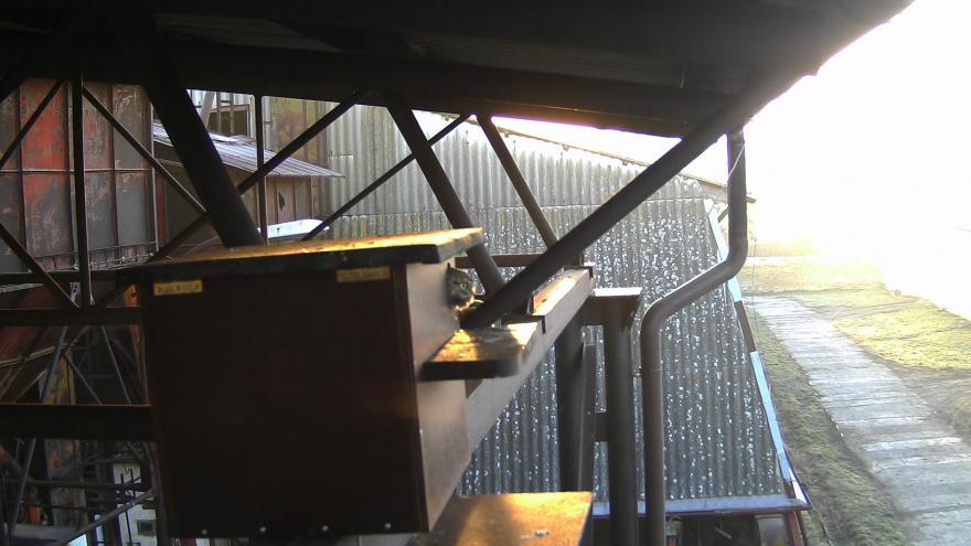 Video Chytré budky s kamerami se snaží zachránit ohrožené sýčky