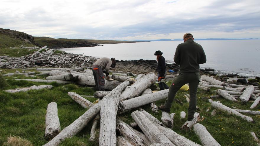 Video Brněnští vědci zkoumali dřevo připlavené k islandským břehům