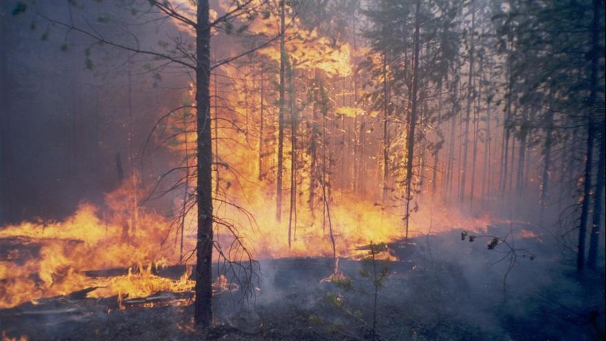 Video Požáry sibiřských lesů bude hasit armáda