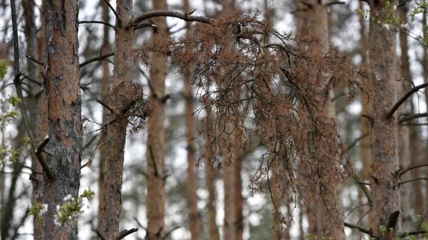 Video Stromy schnou i v okolí Brna
