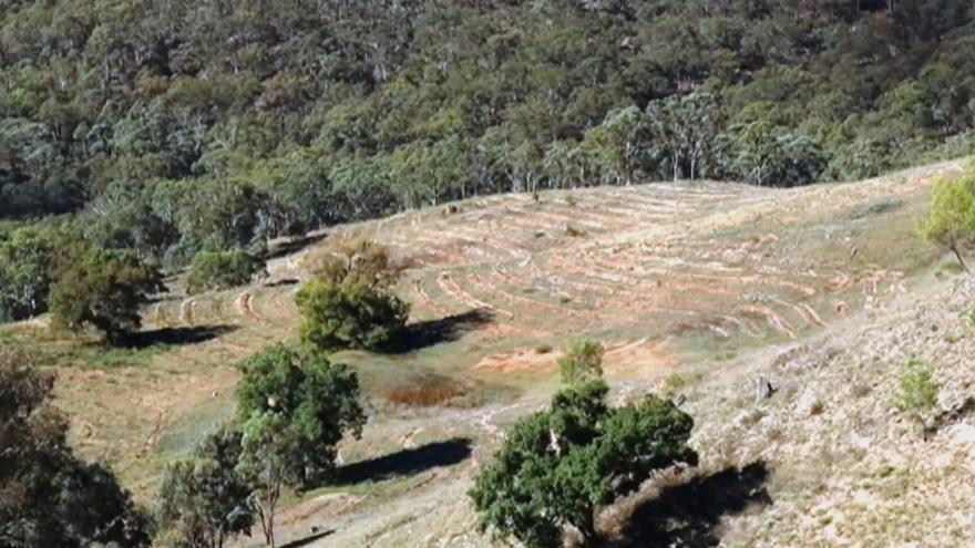 Video Vysazování stromů v Austrálii