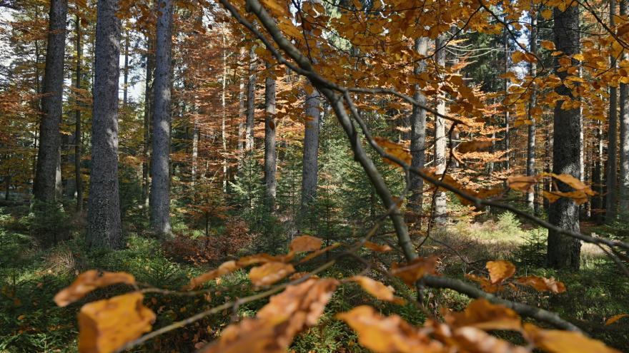 Video Ekologicky obhospodařovaných lesů přibývá