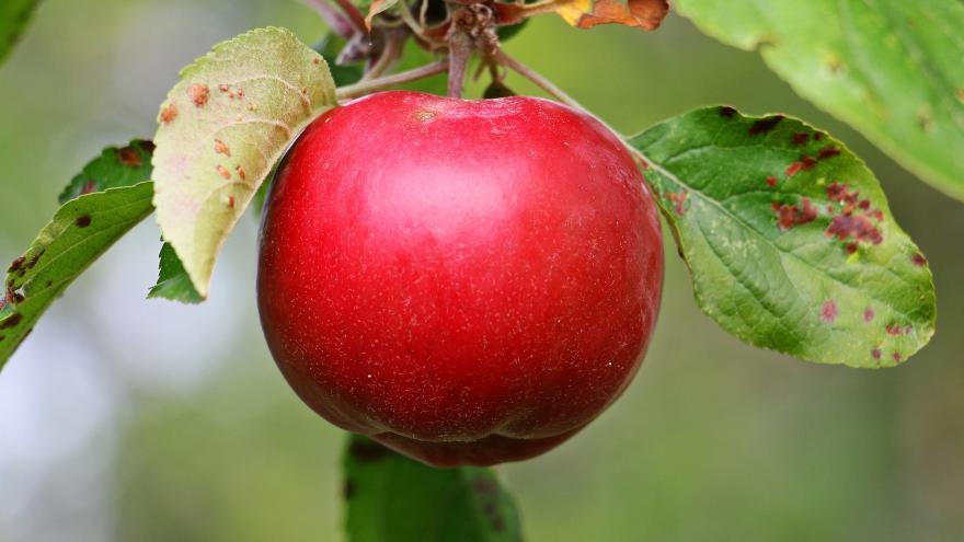 Video Jablka