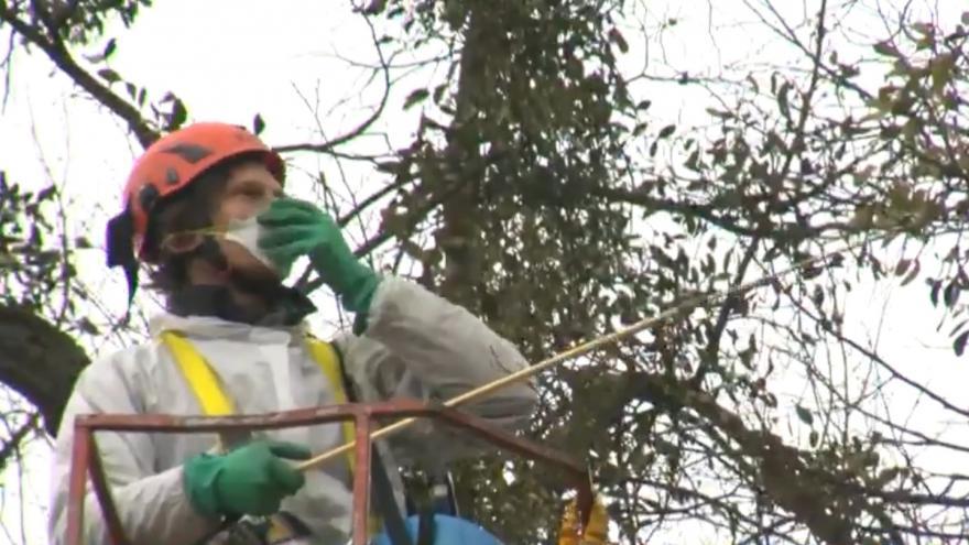 Video Jmelí ničí stromy, ochranný postřik proti němu vyvinuli vědci z Mendelovy univerzity