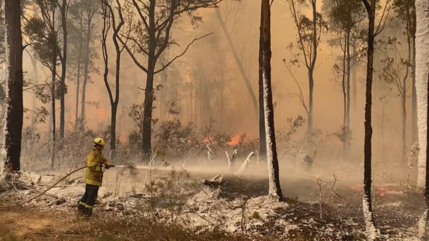Video Události, komentáře: V Austrálii hrozí zhroucení pyramidy celého ekosystému