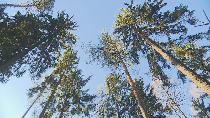 Video Události ČT: Lesníci vloni vytěžili o polovinu víc dřeva, než předloni