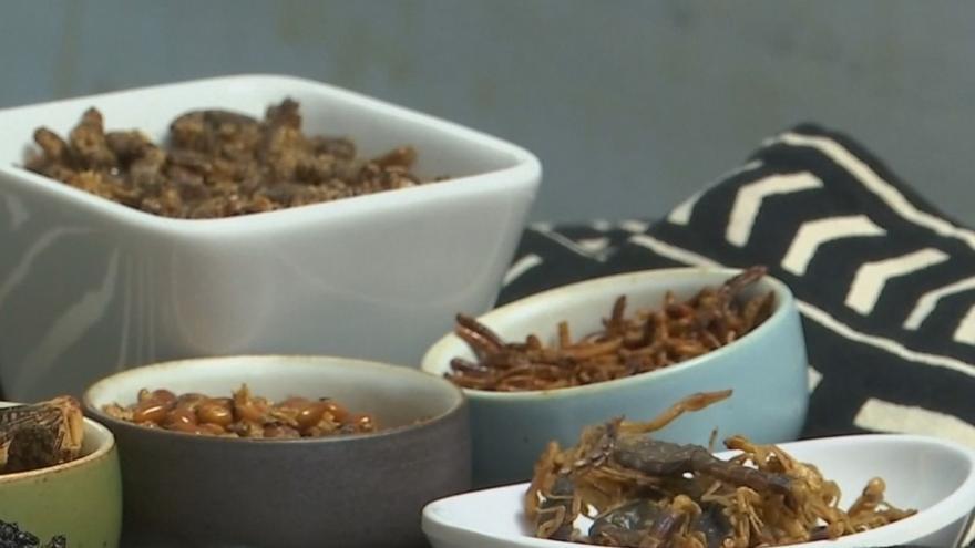 Video Kobylky, larvy či cvrčci na talíři. Hmyz je nově považován za hospodářské zvíře