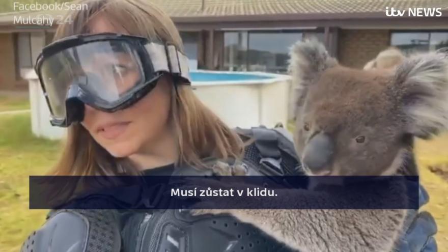 Video Nebezpečná koala?