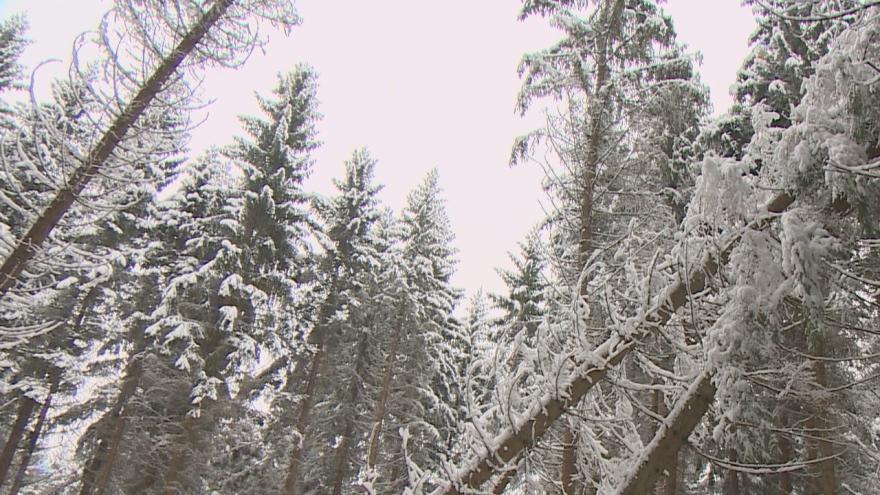 Video Na západě Čech chybí dřevorubci