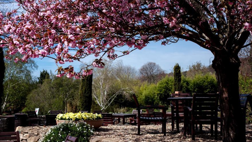 Video Jaro v plné kráse. Venkovní expozice botanické zahrady jsou otevřené
