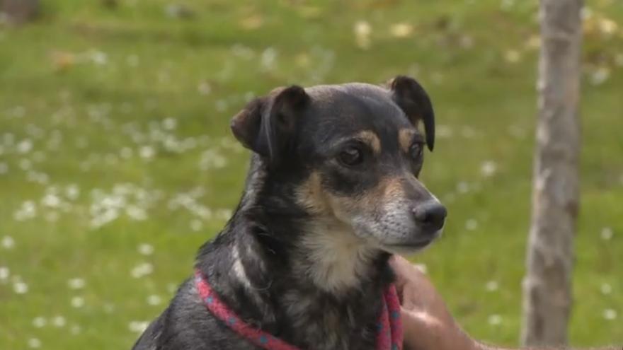 Video Psi z útulku prožívají za nouzového stavu dobré časy. Je větší zájem o jejich péči i adopci