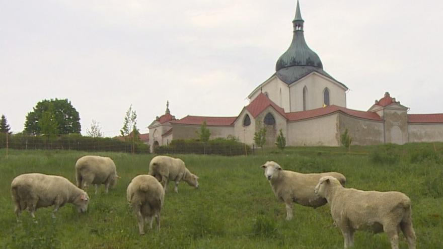 Video Pomoc i atrakce. Po téměř 200 letech se k poutnímu kostelu Zelená hora vrací ovce