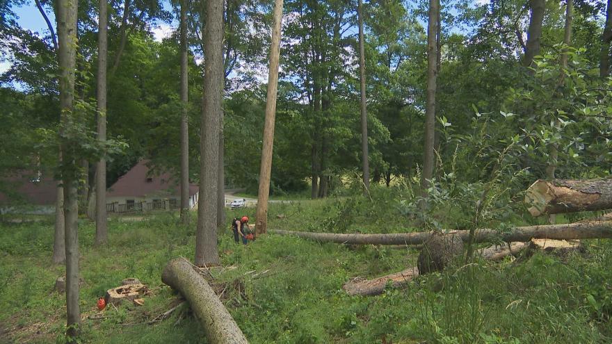 Video Kůrovec zlikvidoval zámecký park kolem zámku Kynžvart. Peníze z vytěženého dřeva se využijí na obnovu