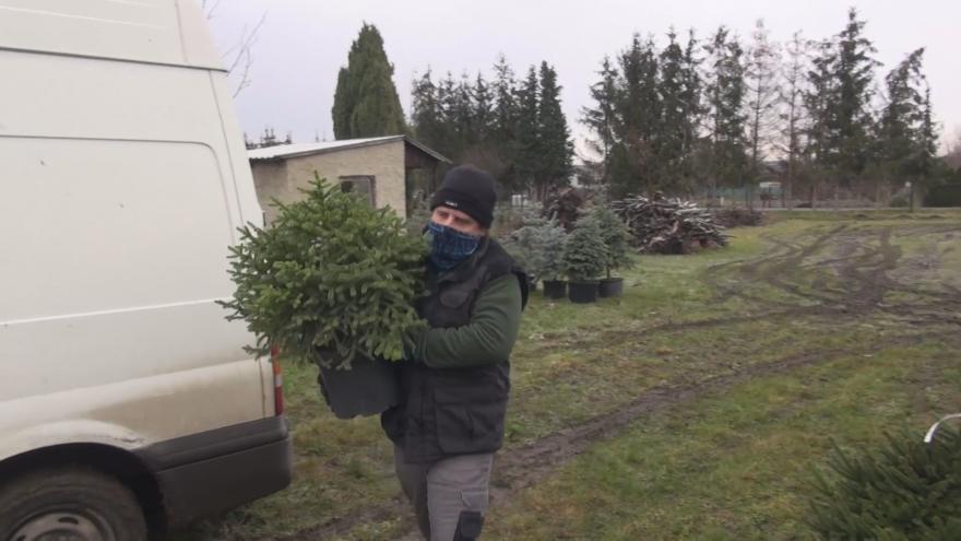 Video Vypůjčené vánoční stromky vracejí lidé zpět. Některé si vánoce za rok zopakují