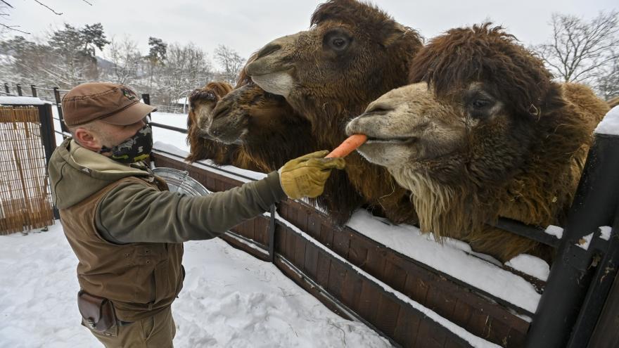 Video 90' ČT24 - Dopad koronaviru na zvířecí říši