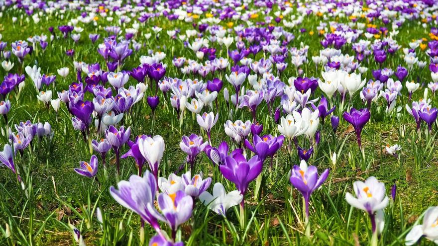 Video Události: Do Česka přichází jaro