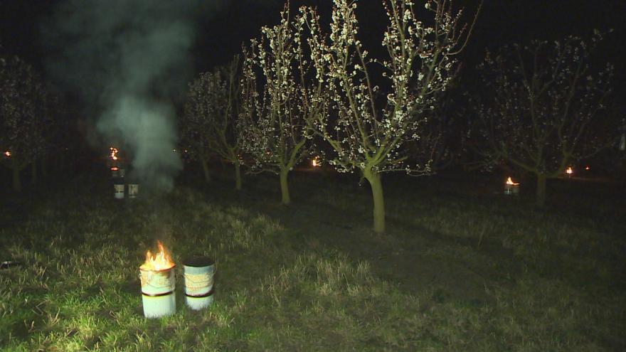 Video Vzduch v sadu rozkvetlých meruněk ohřívají parafinové svíce