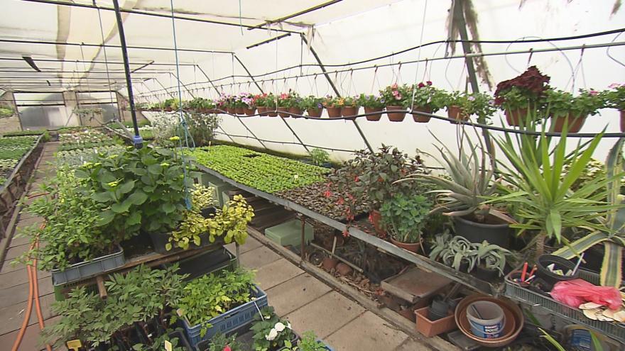 Video Zahradnictví mají plné skleníky. Hitem jsou roubované melouny