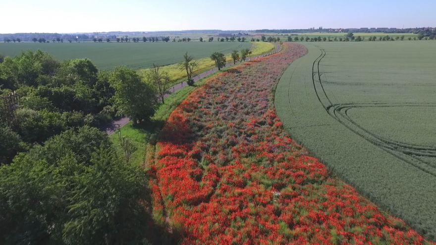 Video Biopásy pomáhají hmyzu, který nepřižije na polích na severu Prahy