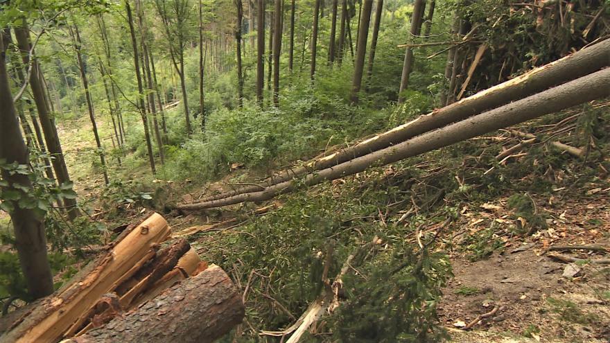 Video Události: Lanovka pomáhá s těžbou kůrovcového dřeva