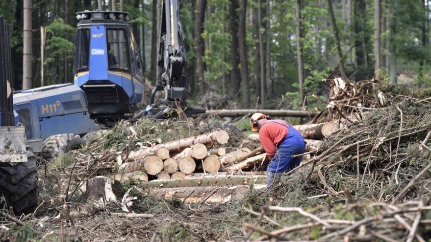 Video Události: Dřevo zdražuje
