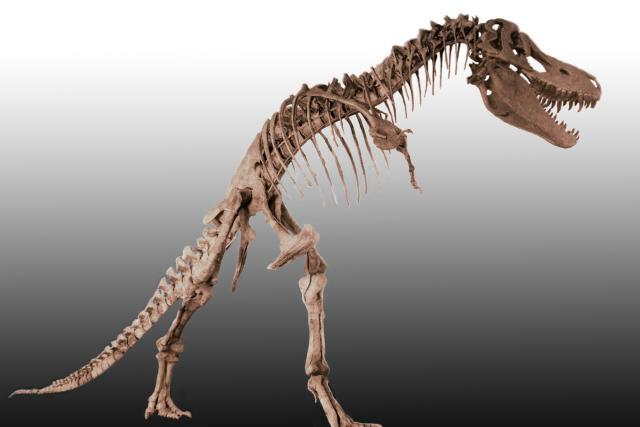 Tarbosaurus Bataar (kostra nalezená v Mongolsku)