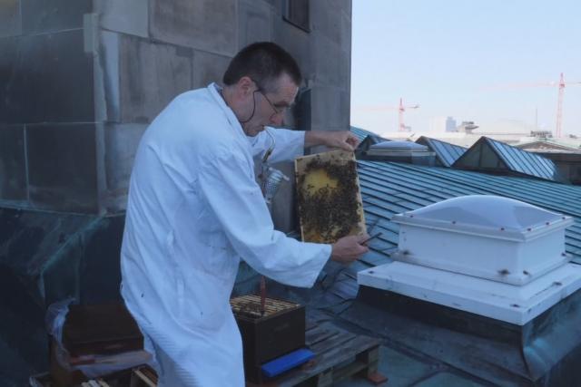 Včelař berlínské katedrály