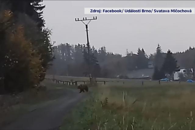 Medvěd v Hostýnských vrších