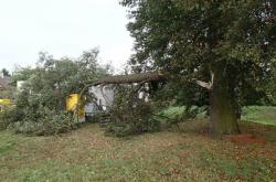 Nalomený strom v Rapotíně na Šumpersku