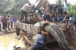Na Srí Lance vyprošťovali z kanálu obřího krokodýla