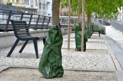 Zavlažovací vaky u stromů v Karlových Varech