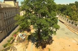 Kácení stromů Na Smetance