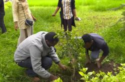 Sázení stromů v Etiopii