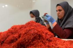 Íránci vyrábějí šafrán