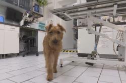Pes a čipování