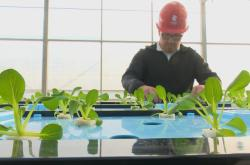 Akvaponická farma v Číně