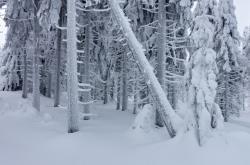 Námraza na stromech vedle jizerské magistrály