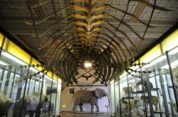 Kostra velryby v Národním muzeu