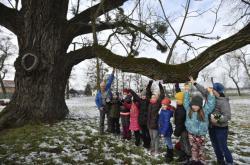 Rob McBride s dětmi u ořešáku v Kvasicích