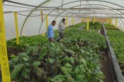 Farma v Jordánsku