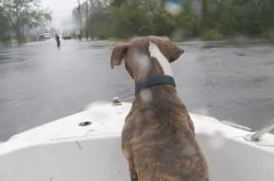 Hurikán Florence - záchrana zvířat v Severní Karolíně