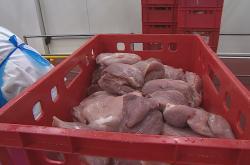 Státní veterinární správa se zaměří na vepřové z dovozu