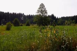 Obnova rašeliniště