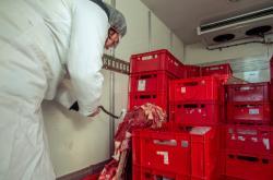Kontroly dovozu masa z Polska